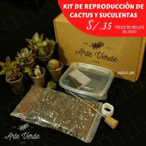 Kit de Reproducción de Cactus y Suculentas