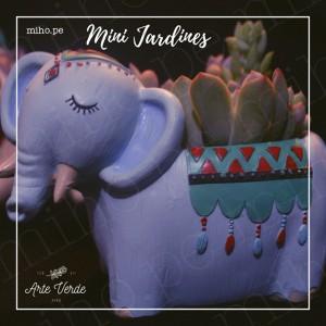 Minijardines con Suculentas - Mucha Variedad